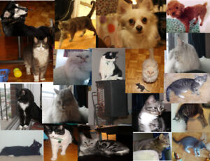 Pet Sitter / Cat Sitting - Keep your pet with a caring Family