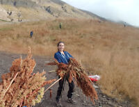 Removing invasive plants in the Eastern fjords of Iceland