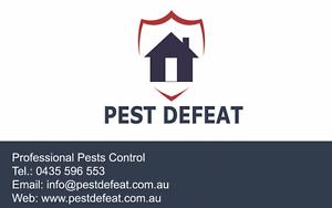 Pest Defeat Brisbane City Brisbane North West Preview
