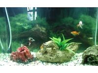 New Fish tank 3 months old (65 Litters) with all accessories for sale