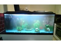 COLD WATER FISH TANK SET UP FOR SALE 3 MONTH OLD