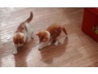 Adorable KITTENs - no longer available - all kittens re-homed now. Thank you for your interest.