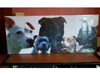 Huge Print On Canvas Of Staffordshire Terriers