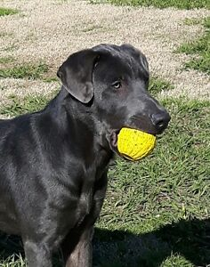Private dog obedience  help.