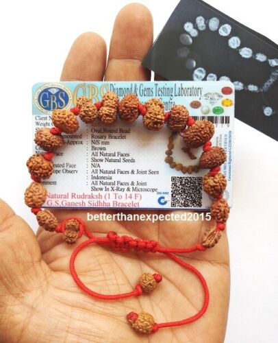 Siddha Bracelet 1 –14 MUkhi Gauri Shankar & Ganesh Rudraksha Certified~Energized