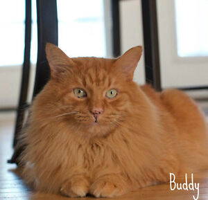 MEET LONG HAIRED HANDSOME BOY.. 'BUDDY'..ADOPT ME