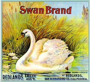Redlands-Swan-2-Orange-Citrus-Fruit-Crate-Label-Art-Print
