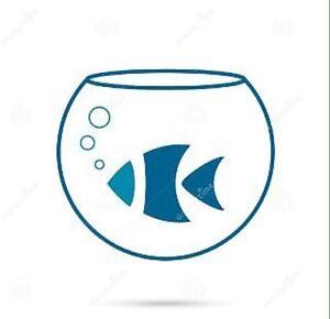 Aquarium Cleaning and Maintenance  !!CHEAP!! Ringwood Maroondah Area Preview