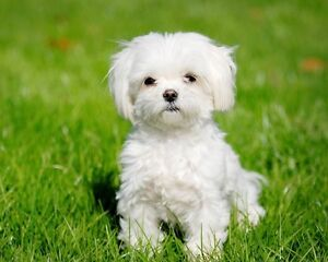 Looking to adopt a small dog