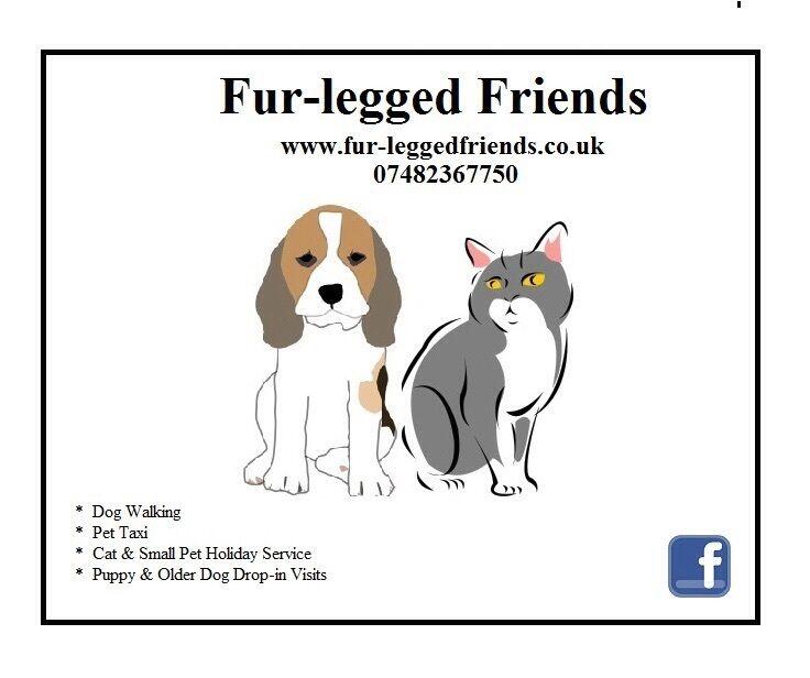 Dog walker: Professional Dog Walking, Pet taxi, Cat sitter, Puppy & Senior dog drop-in visits