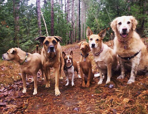 Lakeshore Pet Care - Dog Walking, Pet Sitting & much much more!!