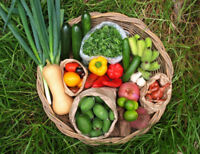 Weekly Organic Veggie Delivery