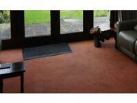Carpet - good quality used