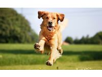 Animal lover dog walking/pet sitting service