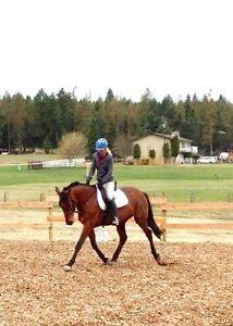 Experienced jumper/dressage mare