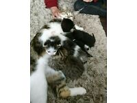 cat and kittens for sale