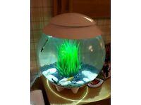 Biorb Halo fish tank 30ltrs