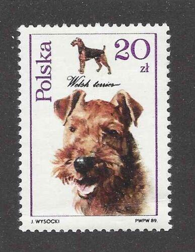Dog Art / Photo Head Portrait Postage Stamp Collection WELSH TERRIER Poland MNH