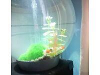 60lt Bio-Orb Aquarium