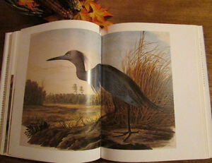 Audubon: The Watercolors for THE BIRDS OF AMERICA ** MINT ** Kitchener / Waterloo Kitchener Area image 6