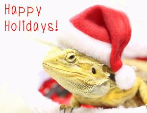 Christmas/Holiday Card Fundraiser!