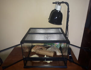 """18""""×18""""×12"""" Exoterra tank, lights and accessories"""