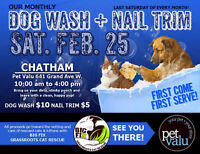 Monthly  Charity Dog Wash for The Big Fix Cat Rescue  TNR Group