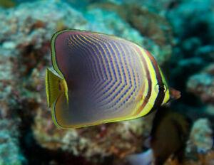 Marine Tropical Fish