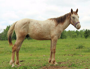 Project Colt - 2 Yr old - SOLD - Thanks to all inquires Peterborough Peterborough Area image 1