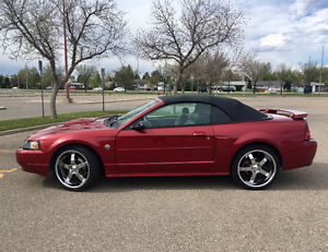 2004 Ford Mustang Convertible GT - 40th Anniversary Edition!