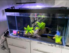 120L Fish tank