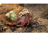 6 Land hermit crabs