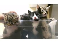 Adorable kittens for sale
