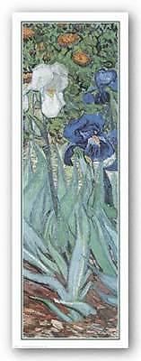 ART PRINT Iris Vincent Van Gogh