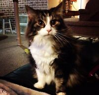 FREE male cat (Leo) to good home