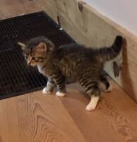 5 Kittens looking for their forever home