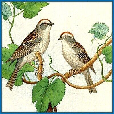 30 Custom Classic Bird Art Personalized Address Labels