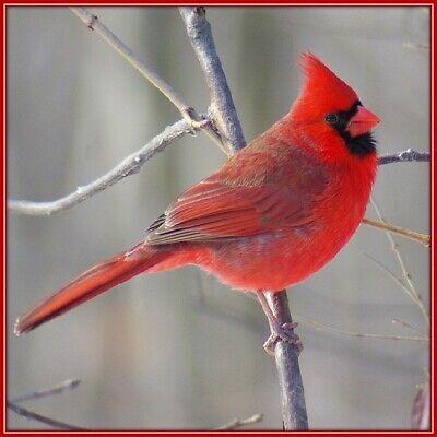 30 Custom Cardinal Personalized Address Labels