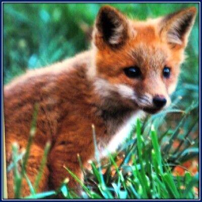 30 Custom Fox Personalized Address Labels