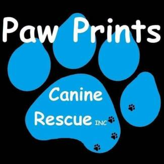 Oops litter program- Paw Prints Canine Rescue