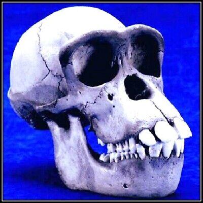 30 Custom Strange Skull Personalized Address Labels