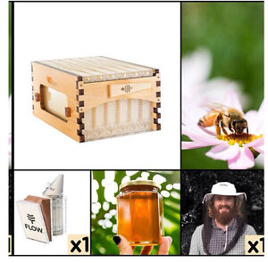 Flow Hive Bee hive Mona Vale Pittwater Area Preview