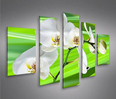 Greenflower -MF Bild auf Leinwand Bilder Kunstdruck Wandbild Poster