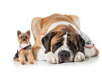 St. John Ambulance 2016 Therapy Dog Calendars Now Available