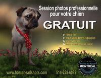 Beaux chiens recherchés pour session photos GRATUITE