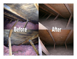 Need Mold Inspections, Mould Remediation / Removal in Markham?