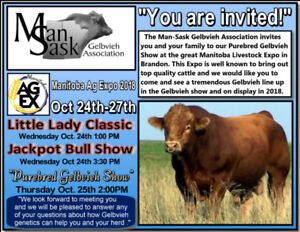 Purebred Gelbvieh replacement heifers will be at Ag Expo.