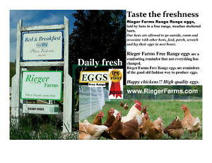 Free Range Eggs, Rieger Farms, Armstrong, BC