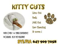 CAT AND KITTEN GROOMING! book now! MEOW!
