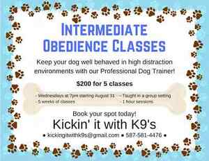 Group. Obedience classes in airdrie